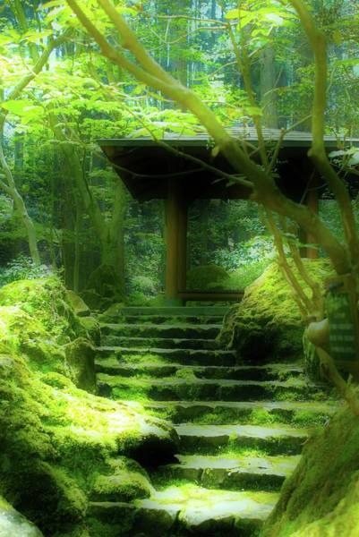 Photograph - The Emerald Stairs by Tim Ernst