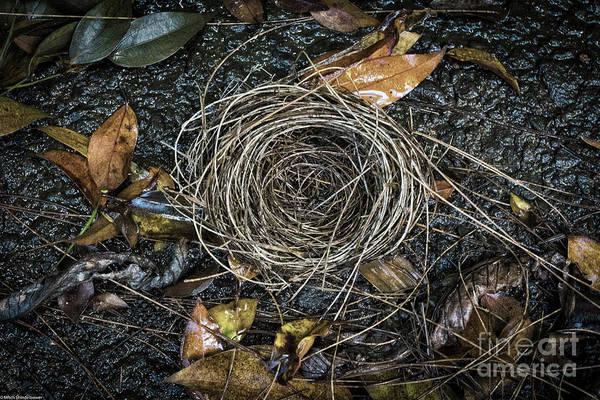 Empty Nest Wall Art - Photograph - The Empty Nest by Mitch Shindelbower