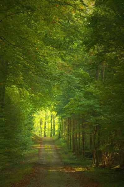 Ceca Wall Art - Photograph - The Enchanted Forest Fairytale by Svetlana Peric