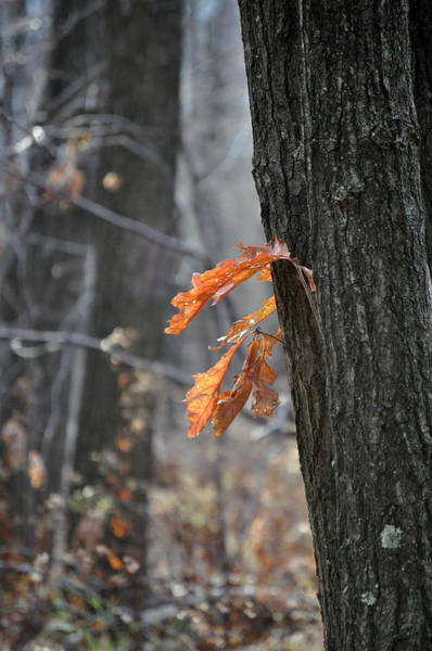 Photograph - The End Of Fall by Trish Tritz