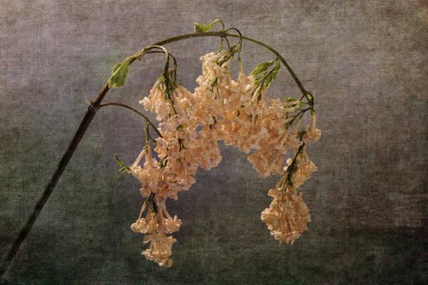 Photograph - The End Of The Lilacs by Randi Grace Nilsberg