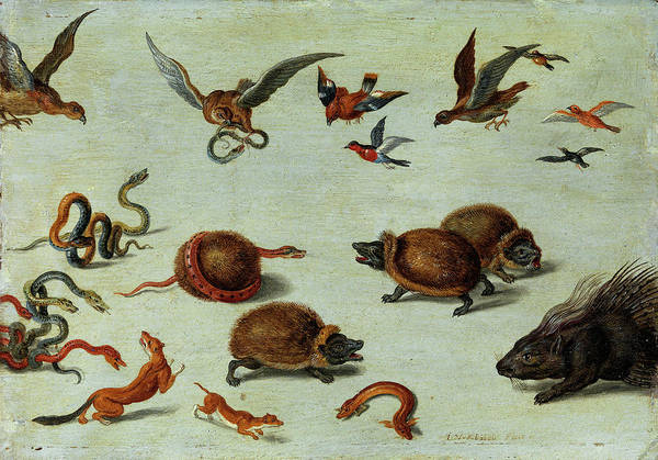 Wall Art - Painting - The Enemies Of Snakes by Jan van Kessel the Elder