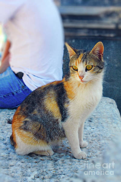 Photograph - The Ephesus Cat by Donna L Munro
