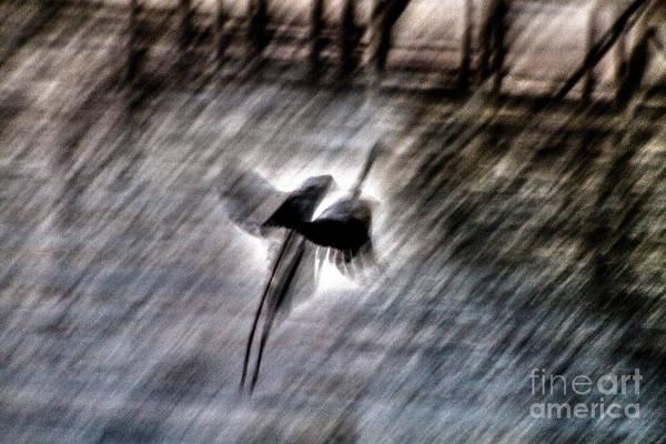 Photograph - The Escape by William Norton