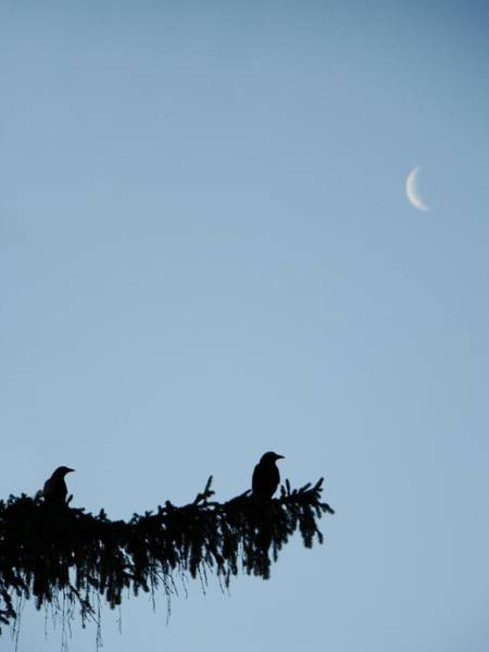 Sliver Photograph - The Evergreen Twins And The Crescent Moon by Gothicrow Images