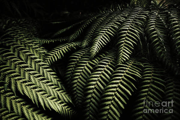 Forestry Photograph - The Exotic Dark Jungle by Jorgo Photography - Wall Art Gallery