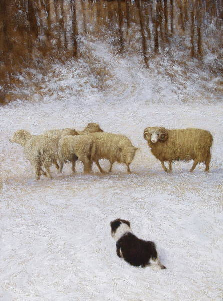 Border Collie Painting - The Eye by Mitch Kolbe
