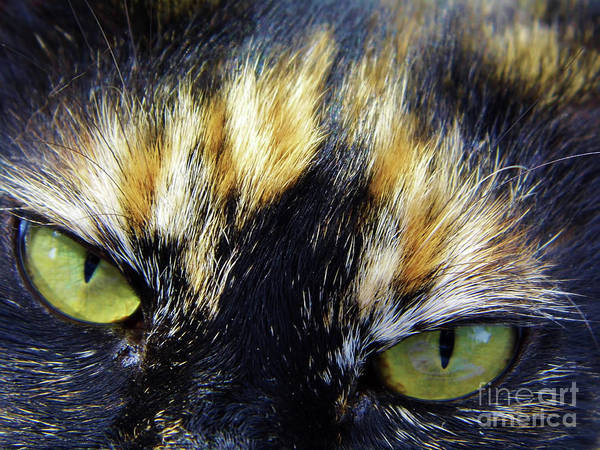 Photograph - The Eyes Have It by D Hackett