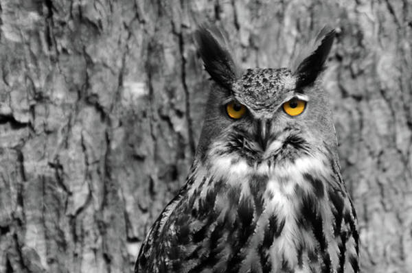 Photograph - The Eyes Of An Owl by Wolfgang Stocker