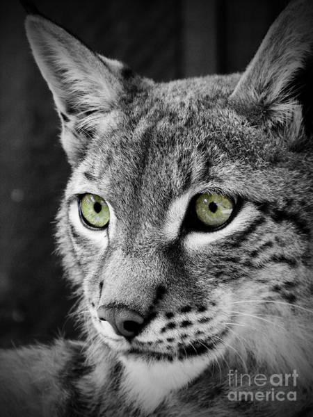 Photograph - The Eyes by Tara Turner