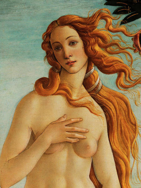 Sandro Botticelli Painting - The Face Of Venus by Sandro Botticelli