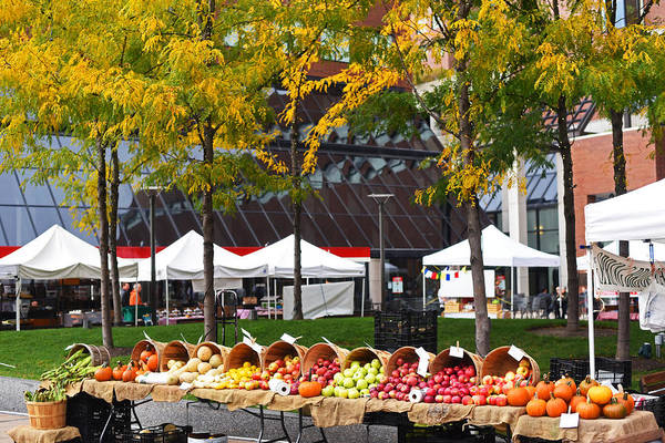 Photograph - The Fall Harvest Is In Kendall Square Farmers Market Foliage by Toby McGuire