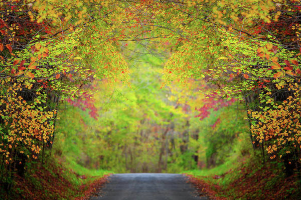 Photograph - The Fall Road by Emmanuel Panagiotakis
