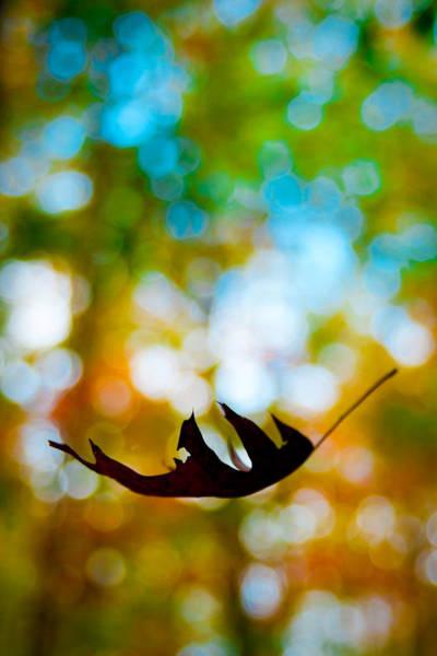 Photograph - The Fall by Ryan Heffron