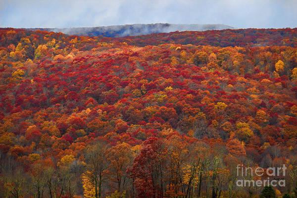 Photograph - The Fall Season Of Color by Roberta Byram