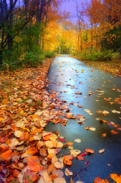 Photograph - The Fallen Leaves Of Autumn by Tara Turner