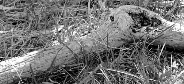 Photograph - The Fallen - Limb And Joint by Mario MJ Perron