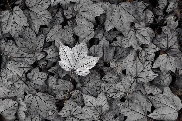 Photograph - The Fallen by Mark Fuller