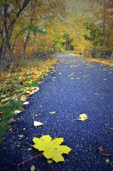 Photograph - The Fallen Yellow Leaf by Tara Turner