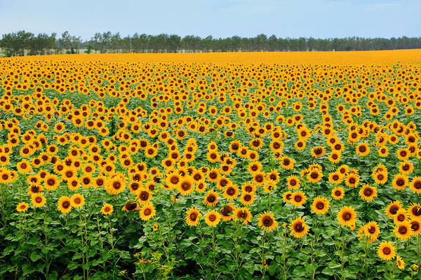 Photograph - The Field Of Suns by Victor Kovchin