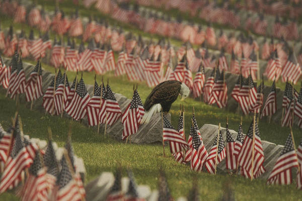 Wall Art - Photograph - The Final Salute by Carrie Ann Grippo-Pike