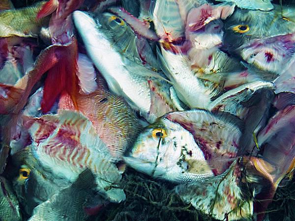 Photograph - The Fish Remains by Bob Slitzan