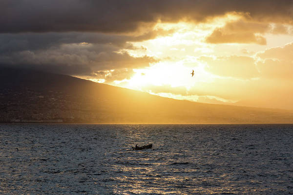 Photograph - The Fisherman And The Seagull by Georgia Mizuleva