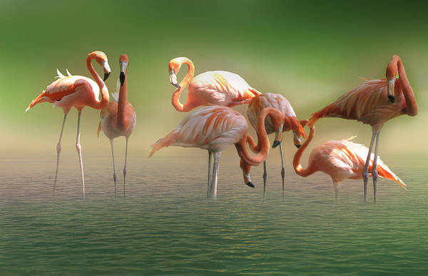 Phoenicopterus Roseus Wall Art - Photograph - The Flamingos by Art Spectrum