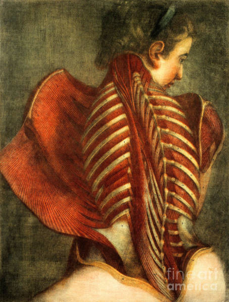 Photograph - The Flayed Angel by Science Source