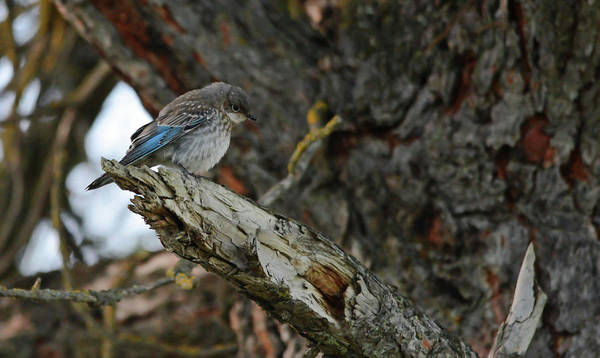Wall Art - Photograph - The Fledgling by Whispering Peaks Photography