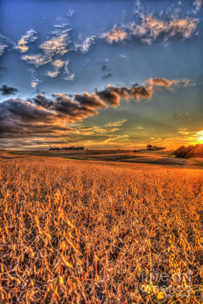 The Fleeting Sunset Missouri Soybean Farming Art  Art Print