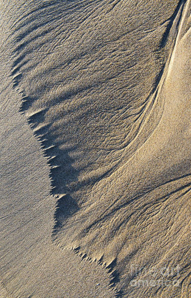 Photograph - The Flight Of Sand by Tim Gainey