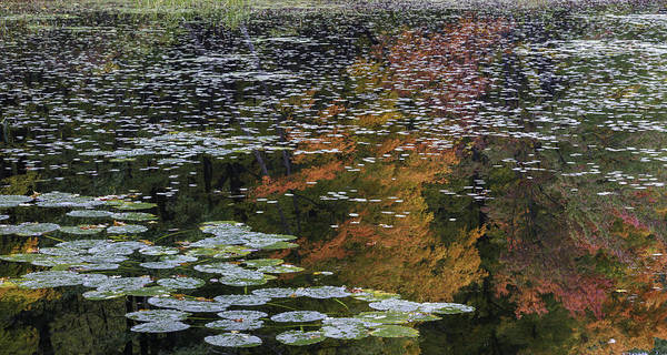 Photograph - Floating Mirror - Visions Of Fall by T-S Fine Art Landscape Photography