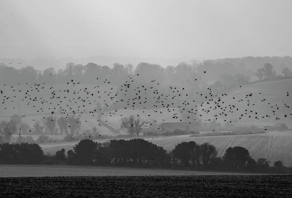 Twitcher Wall Art - Photograph - The Flock. by Angela Aird