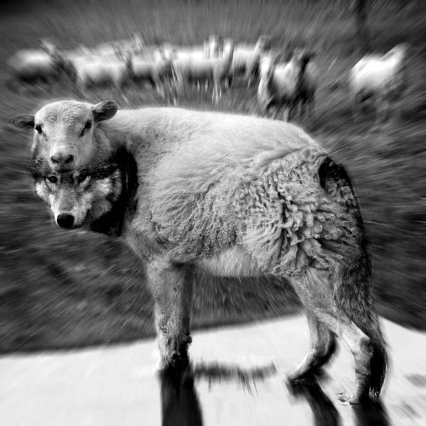 Weird Digital Art - The Flock Is Safe Grayscale by Marian Voicu