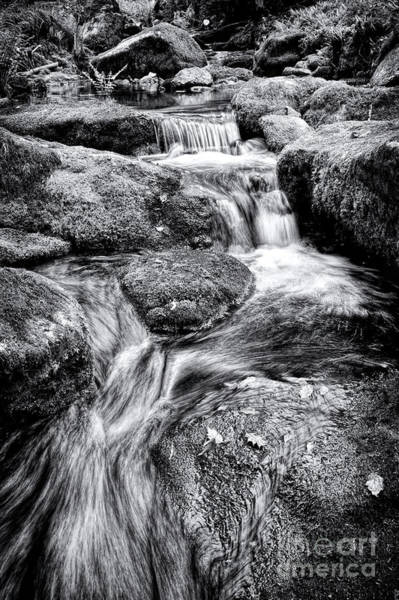 Gully Photograph - The Flow by Tim Gainey