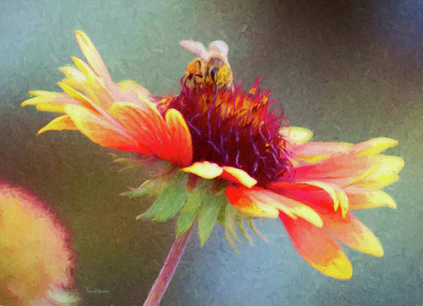 Photograph - The Flower And The Bee by Ericamaxine Price