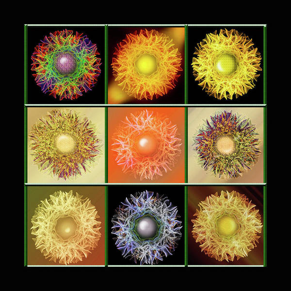 Showpiece Digital Art - The Flower Bed by Andy Young
