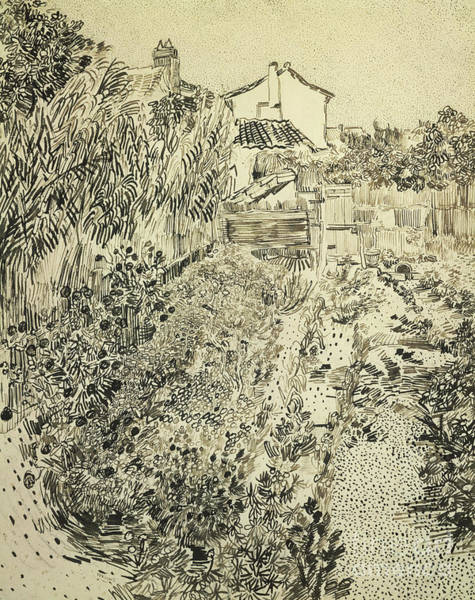 Allotment Wall Art - Drawing - The Flower Garden, 1888 by Vincent Van Gogh
