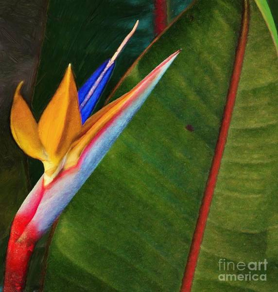 Photograph - the flower of God by John Kolenberg