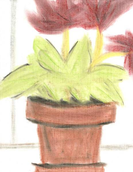 Wall Art - Drawing - The Flower Pot by David Jacobi