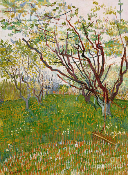Apple Orchard Painting - The Flowering Orchard, 1888 by Vincent Van Gogh