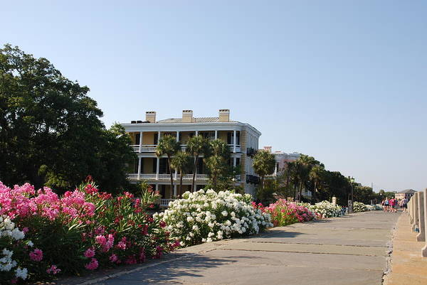 Photograph - The Flowers At The Battery Charleston Sc by Susanne Van Hulst