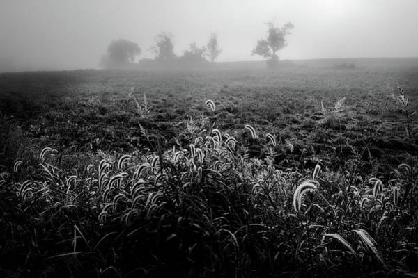 Photograph - The Fog 2017 by Bill Wakeley