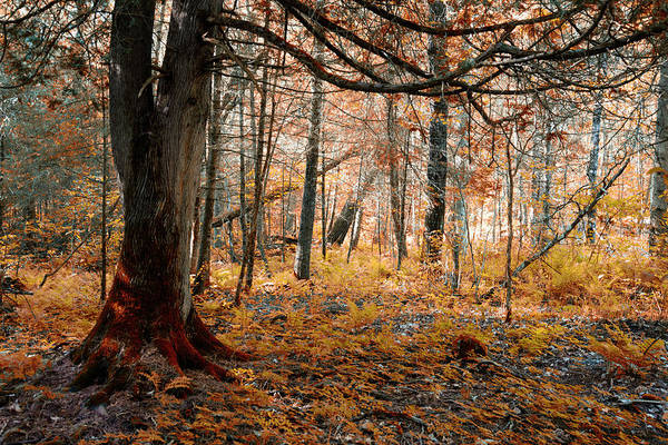 Photograph - The Forest Floor by CA Johnson