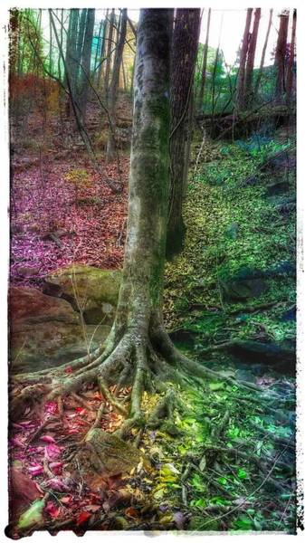 Photograph - The Forest For The Trees by Christine Paris