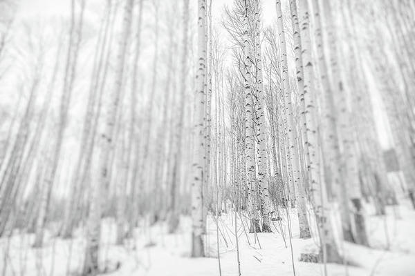 Wall Art - Photograph - The Forest For The Trees by Eric Glaser