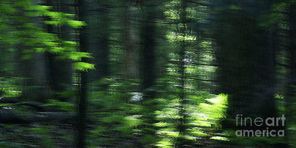 Photograph - The Forest For The Trees by Linda Shafer