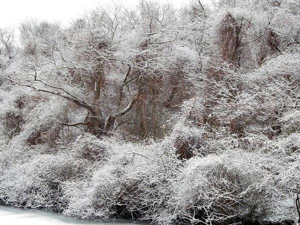 Photograph - The Forest Hush by Lynda Lehmann