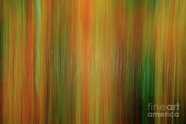 Wall Art - Photograph - The Forest by Michael Tidwell